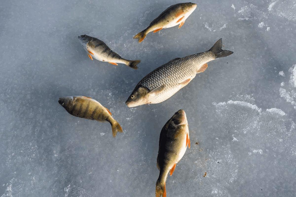 eislochfischen-11