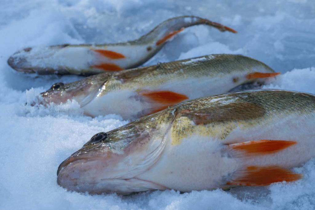 Eislochfischen