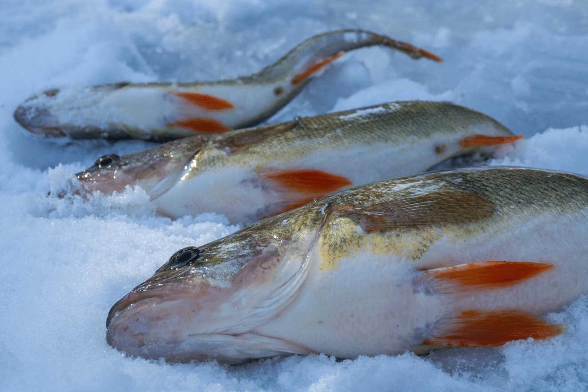eislochfischen-4