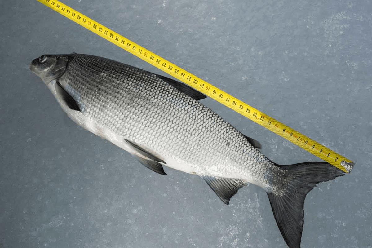 eislochfischen-7