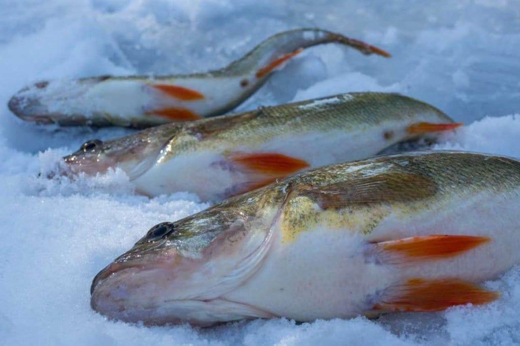 Eislochfischen 2018