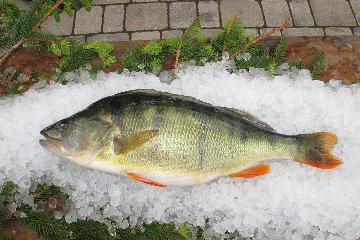 Ferienhof-Hoffmann-Anglersteg