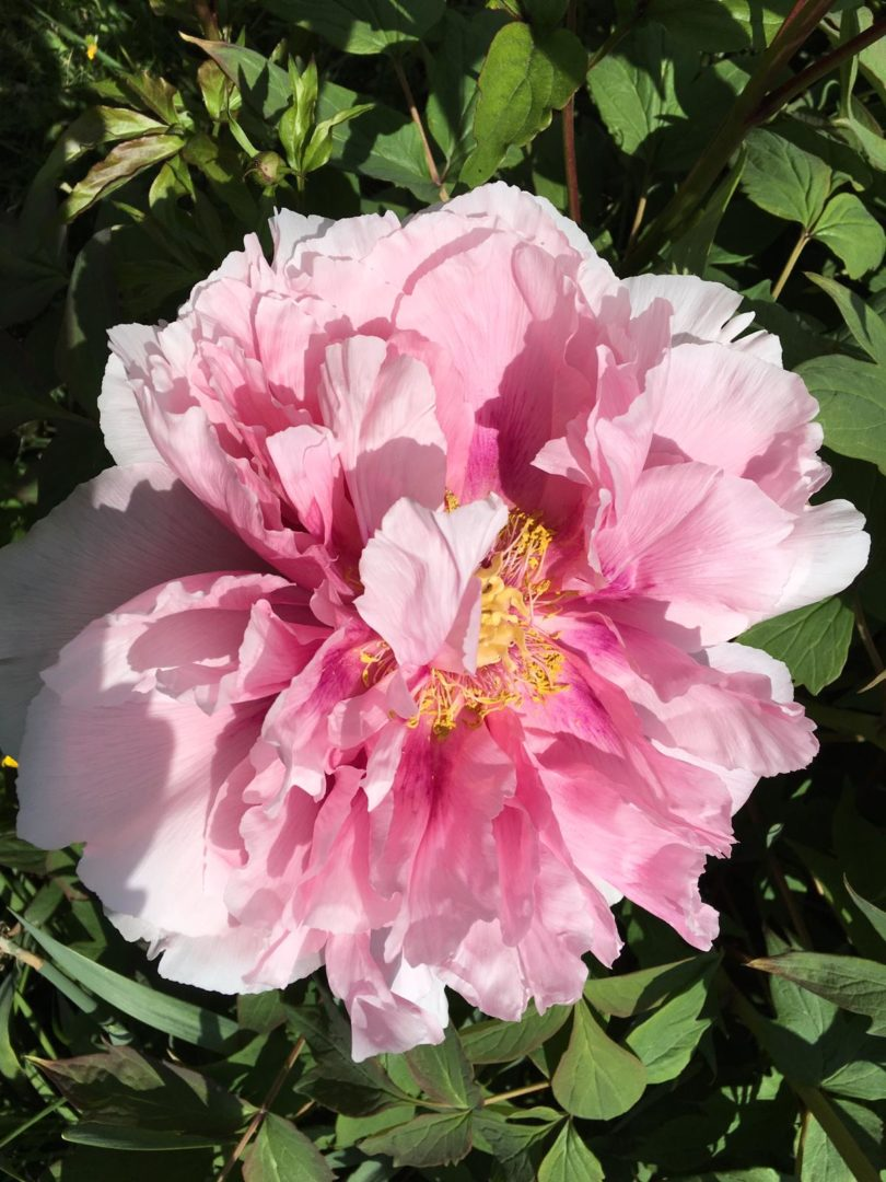 Blumengruss vom Weissensee