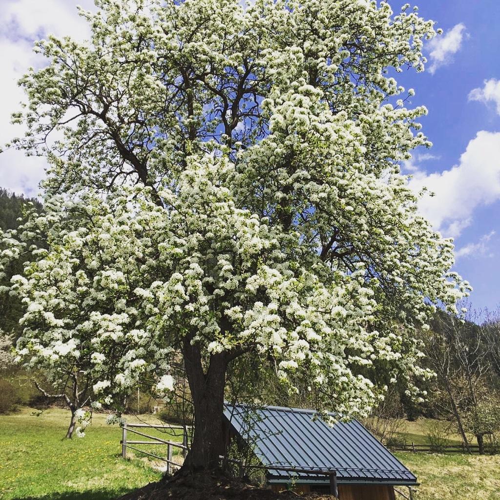 Frühlingsgruss