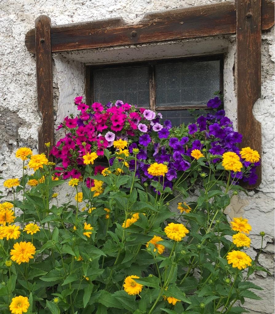 Sommer im Ferienhof Hoffmann